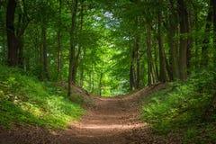 Trayectoria en el bosque verde en la luz del sol Foto de archivo