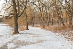 Trayectoria en el invierno con nieve y árboles fotos de archivo libres de regalías