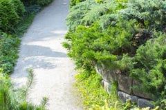 Trayectoria en el jardín, adornado con los árboles coníferos Trayectoria que camina, ajardinando parques y jardines imagen de archivo