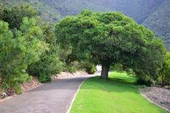 Trayectoria en el jardín botánico nacional de Kirstenbosch Foto de archivo libre de regalías