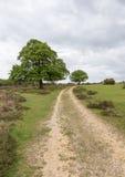 Trayectoria en el nuevo bosque, Hampshire de la colina Imagenes de archivo