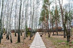 Trayectoria en el parque entre los pinos y los abedules Imagen de archivo