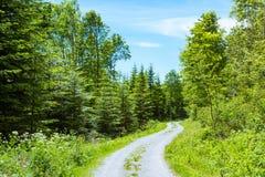 Trayectoria en Forest Daytime Footpath que camina el St del parque de la escalada fotografía de archivo