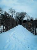 Trayectoria en invierno con huellas Foto de archivo