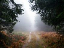 Trayectoria en la niebla fotos de archivo libres de regalías
