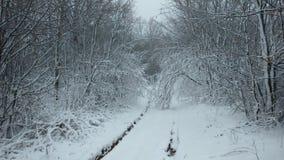 Trayectoria en la nieve en el bosque fotografía de archivo libre de regalías