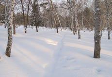 Trayectoria en la nieve un parque del invierno del día soleado Foto de archivo