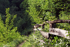 Trayectoria en la primavera en las montañas de Rumania Imágenes de archivo libres de regalías