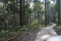 Trayectoria en la selva Foto de archivo