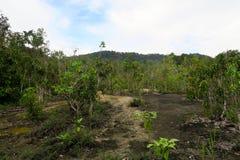 Trayectoria en la selva verde Imagen de archivo libre de regalías
