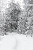 Trayectoria en las maderas en invierno Imagen de archivo