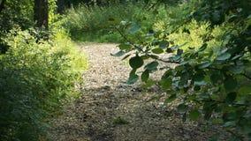 Trayectoria en los árboles del Forest Green del otoño en ambos lados almacen de metraje de vídeo