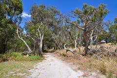 Trayectoria en naturaleza: Reserva del humedal de Cockburn, Australia occidental Imagenes de archivo