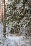 Trayectoria en nevadas del bosque después fotos de archivo