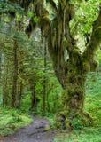 Trayectoria en selva tropical fotografía de archivo