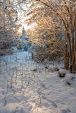 Trayectoria en un bosque del invierno imagenes de archivo