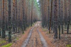 Trayectoria en un bosque denso del pino Imágenes de archivo libres de regalías