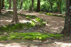 Trayectoria en un bosque hermoso del verano Imagenes de archivo