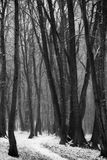 Trayectoria en un bosque nevoso del invierno Fotografía de archivo