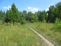 Trayectoria en un parque del verano. Paisaje. Imagenes de archivo