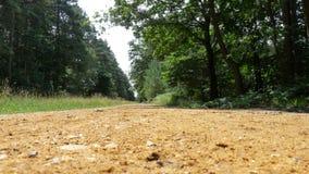 Trayectoria en un paseo del bosque fotografía de archivo libre de regalías