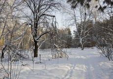 Trayectoria en Urales forestSouthern nevosos Rusia Fotografía de archivo
