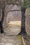 Trayectoria enmarcada por los árboles Fotos de archivo libres de regalías