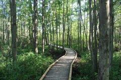 Trayectoria enselvada a través de un bosque Foto de archivo