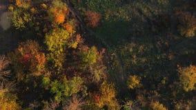 Trayectoria entre árboles del otoño almacen de metraje de vídeo