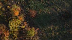 Trayectoria entre árboles del otoño almacen de video