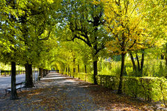Trayectoria en el parque del otoño Imagenes de archivo