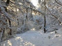 Trayectoria entre árboles nevosos imagen de archivo