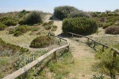Trayectoria entre la duna de arena Imagen de archivo