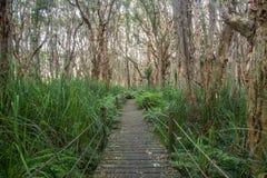 Trayectoria entre los árboles Imagen de archivo