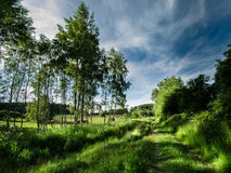 Trayectoria entre los árboles por completo de luces y de sombras Imagenes de archivo