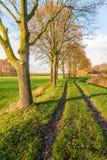 Trayectoria entre una fila de árboles y las plantas de lámina amarilleadas foto de archivo libre de regalías