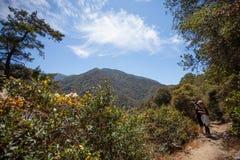 Trayectoria estrecha hermosa del alza en Santa Anita Canyon, bosque del Estado de Ángeles, San Gabriel Mountain Range cerca de Lo foto de archivo