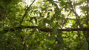 Trayectoria fangosa y bosque grueso metrajes