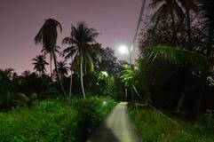Trayectoria iluminada a través de la selva de la noche imagenes de archivo
