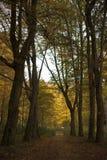 Trayectoria mágica - otoño rojo en el parque Imagen de archivo libre de regalías