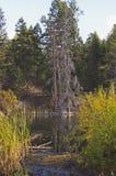 Trayectoria mojada al lago Fotografía de archivo