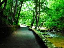 Trayectoria natural del puente Fotos de archivo