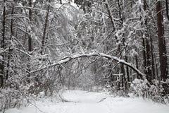 Trayectoria nevada del bosque hermoso del invierno en el bosque que el árbol dobló bajo el peso de nieve Fotografía de archivo libre de regalías