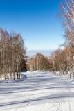 Trayectoria Nevado a través de la arboleda del abedul Fotografía de archivo libre de regalías