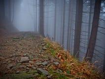 Trayectoria oscura en árbol en niebla imágenes de archivo libres de regalías