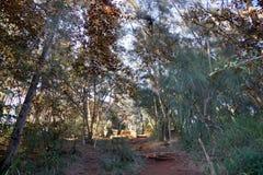 Trayectoria para arriba en bosque en la zona de recreo de agua dulce del estado del  de WahiawÄ Foto de archivo