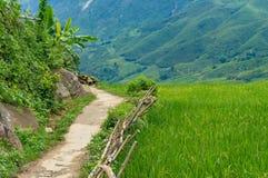 Trayectoria peatonal en campo con la opinión del campo del arroz Fotografía de archivo libre de regalías