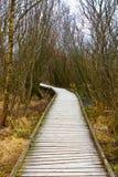 Trayectoria que camina de madera para entrar en el bosque Imagen de archivo