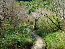 Trayectoria que camina de madera a través de arbustos y de árboles Fotografía de archivo