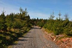 Trayectoria que camina del bosque que lleva a través de árboles de la conífera Foto de archivo
